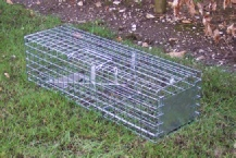 A professional size cage trap for grey squirrels